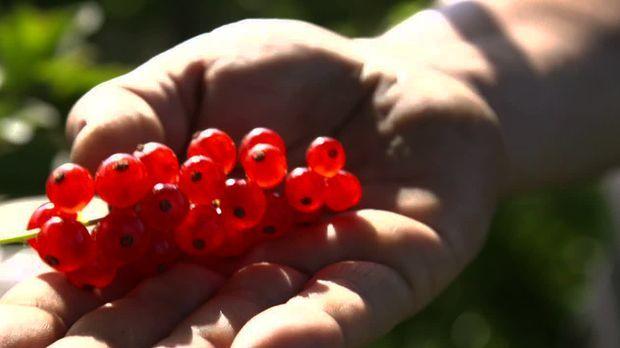Abenteuer Leben - Täglich - Freitag: Der Weg Der Johannisbeere