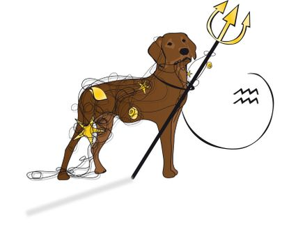 Wassermannhund Kopie