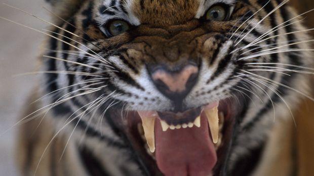 Wenn Tiere angreifen, werden Menschen verletzt. Jeden Tag töten Tiere tausend...