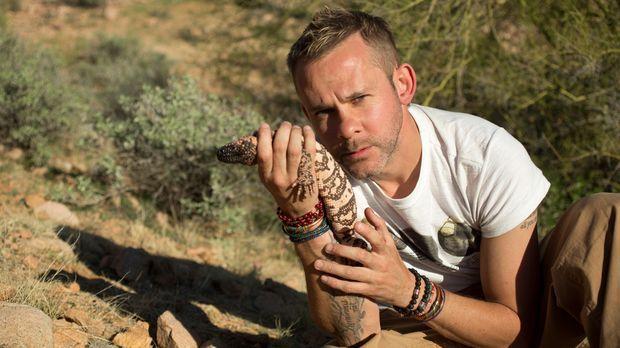 In Arizona geht Dominic Monaghan auf Kuschelkurs mit einer Gila-Krustenechse...