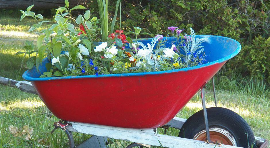 staudenbeet anlegen - sat.1 ratgeber, Garten und Bauen