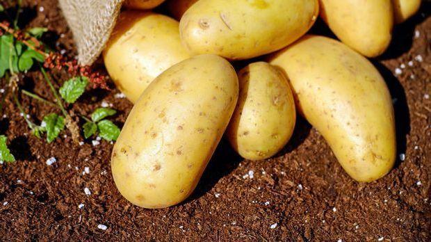Sack Kartoffeln ausgeschüttet auf der Erde