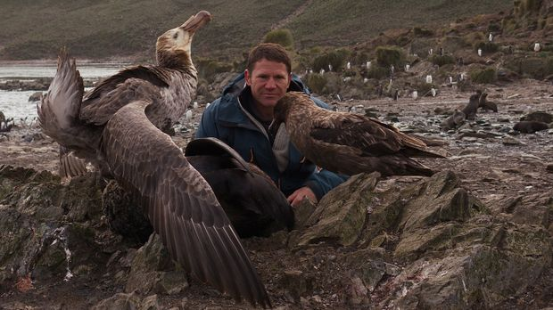 Auf der Insel der Vögel beobachtet Steve Backshall Raubmöven und Sturmvögel ....