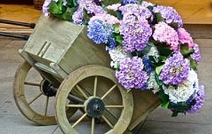Deko Bollerwagen mit Blumen