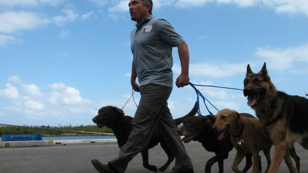 Der Hundeflüsterer Cesar Millan soll das Sozialleben einer Hundestaffel beleb...