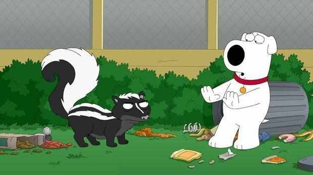Brian (r.) ist von einem Stinktier (l.) im Garten bespritzt worden und darf d...