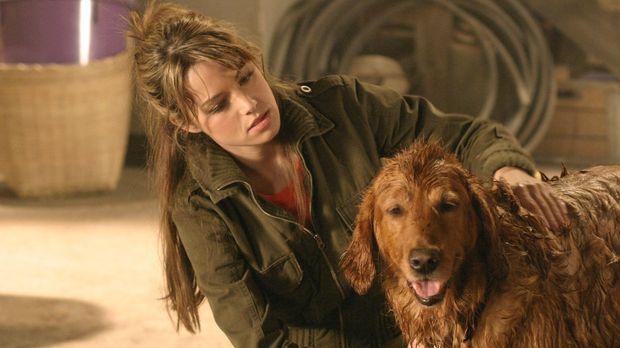 Als Lois (Erica Durance) versehentlich einen Hund anfährt und ihn zu den Kent...