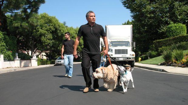 Der Hundeprofi Cesar Millan (r.) ist momentan der berühmteste und gefragteste...