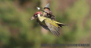 Wiesel_Gandalf
