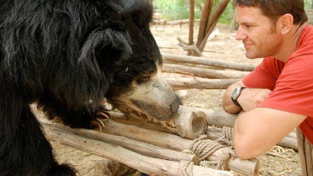 Steve Backshall kann stolz sein einen lebenden Lippenbär gefunden zu haben, d...