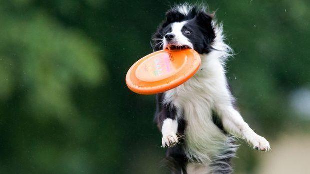 Hundefrisbee-dpa