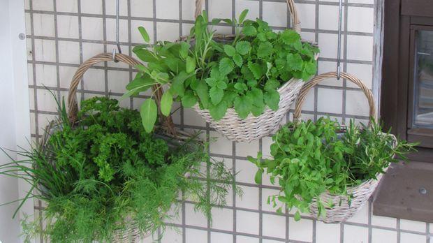 kr uter auf dem balkon pflanzung und pflege sat 1 ratgeber. Black Bedroom Furniture Sets. Home Design Ideas