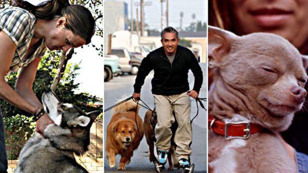 Er weiß, was Hunde und Menschen wollen: Cesar Millan ist Der Hundeflüsterer -...