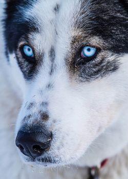Life Below Zero - Überleben in Alaska - Im Frühjahr sichern die Hunde den abg...