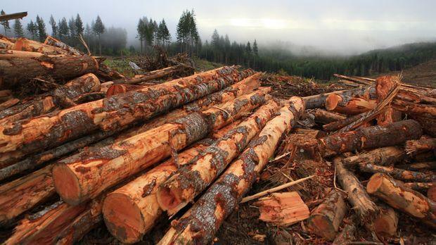 Die Saison ist fast zu Ende und der Ton unter den Holzfällern wird rauer ......