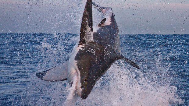 Die Gewässer vor der Küste Südafrikas wimmeln von aufregenden Tieren. Zu dies...