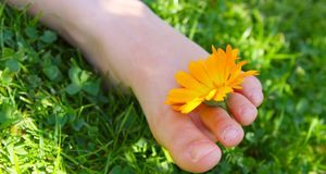 Enthält die Schrundensalbe Ringelblumen, können Sie sich ihrer Wirkung gewiss...