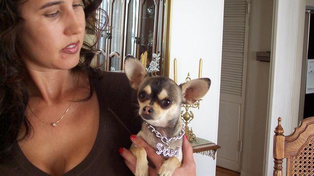 Zu den Hunden, die Cesar besonders viel Geduld und Nerven abverlangen, sind -...
