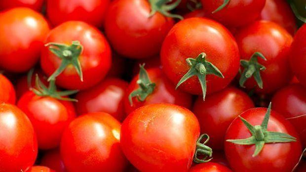 Ein Strauch frischer Tomaten