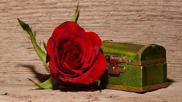 rose-557695
