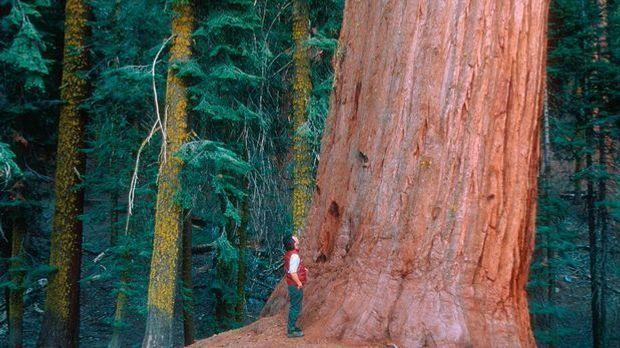 Waldschutzmaßnahmen