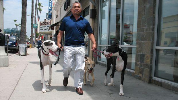 Die Deutschen Doggen Violet und Hudson sind ein perfektes Team. Als jedoch Vi...