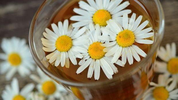 Kamillen im Tee