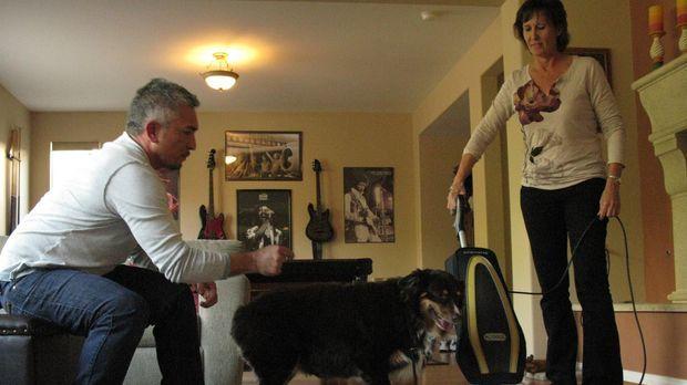 Heute trifft Cesar (l.) drei Hunde, die allesamt Angst vor bestimmten Gegenst...