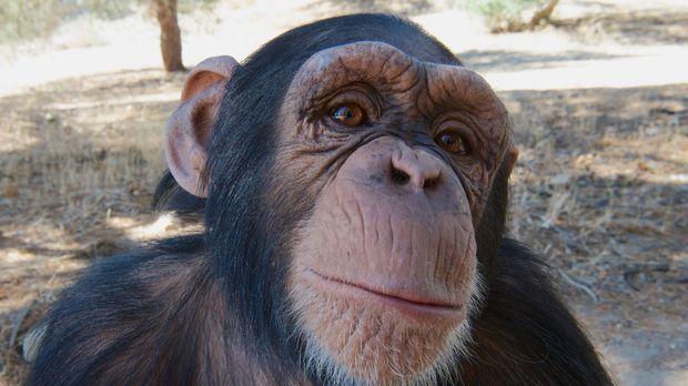 Tier-Filmer Gordon Buchanan macht sich auf, zu erkunden, warum manche Tierart...