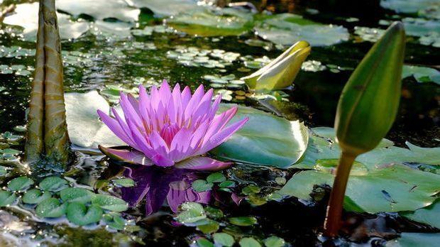 Eines sollten Sie beachten, wenn Sie ein stehendes Gewässer im Garten haben:...