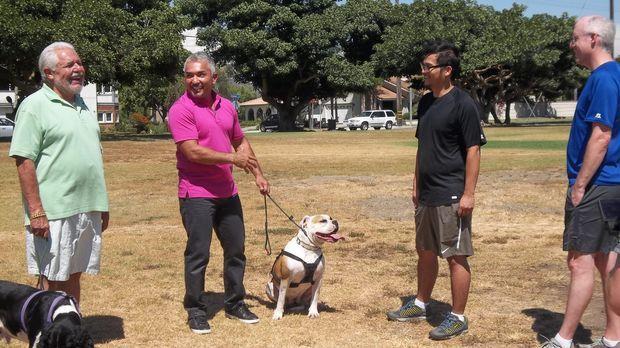 Arturo (l.) wendet sich hilfesuchend an Cesar (2.v.l.), nachdem der Hund sein...