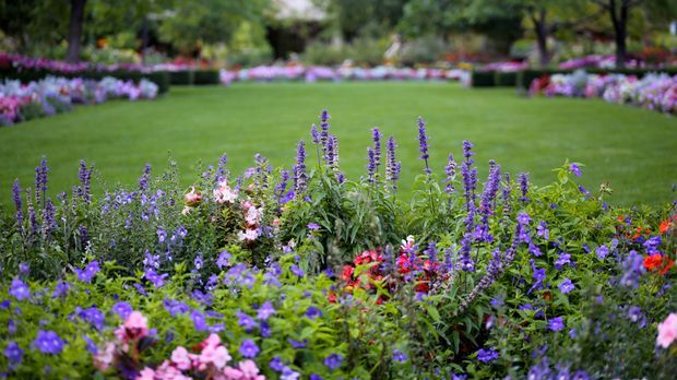 flowers-464516