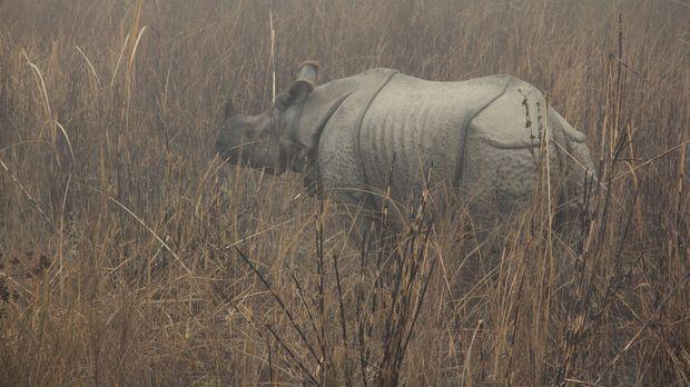 Dank eines Elefanten stößt das Team in den Höhen Nepals auf ein äußerst schle...
