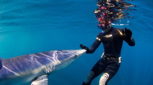 In Kalifornien nimmt Steve Backshall Kontakt mit einem Blauhai auf ... © Kyle...
