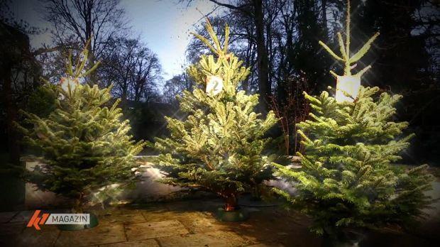 K1 Magazin - K1 Magazin - Online-weihnachtsbäume Im Verbrauchertest