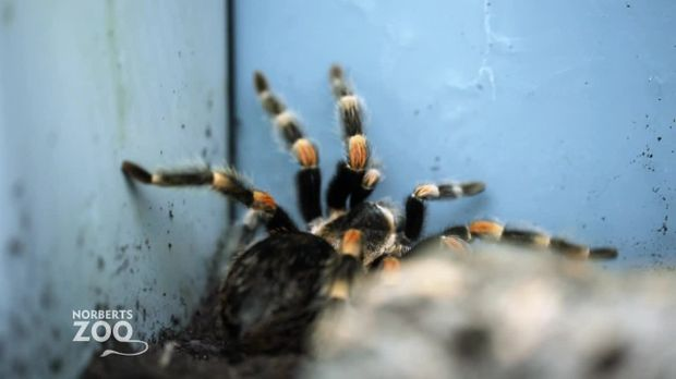 Norberts Zoo - Der Größte Tierladen Der Welt - Norberts Zoo - Der Größte Tierladen Der Welt - Pfui Spinne! Familienzwist Beim Zoobesuch