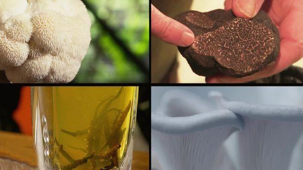 Abenteuer Leben - Täglich - Donnerstag: Pilze Weltweit: Die Top 4 Pilzprojekte