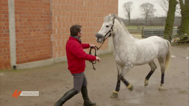 K1 Magazin - K1 Magazin - Pferde-therapie: Der Pferdeversteher Im Einsatz
